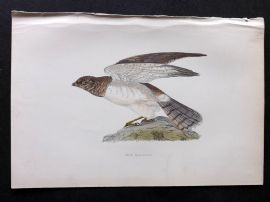 Morris 1897 Antique Hand Col Bird Print. Hen Harrier